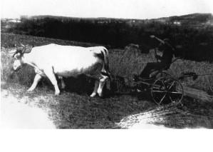 moisson-vers-1950-brionnais-archive-paul-malatier