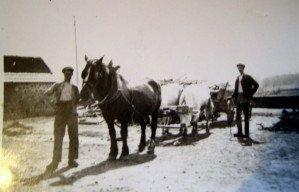 Attelage de vaches à Chassigny sous dun 1