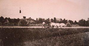 Attelage de vaches à Chassigny sous dun 3