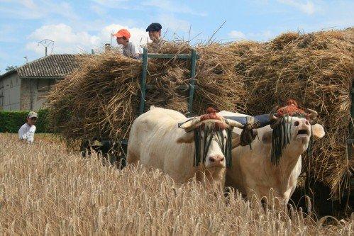 Fête du patrimoine de Manziat le 5 Août 2012 1