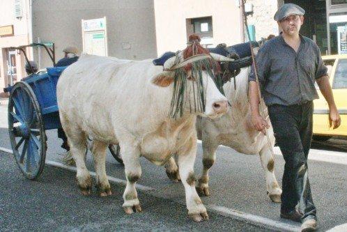 Fête du patrimoine de Manziat le 5 Août 2012 10