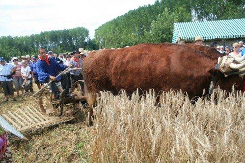 Fête du patrimoine de Manziat le 5 Août 2012 14