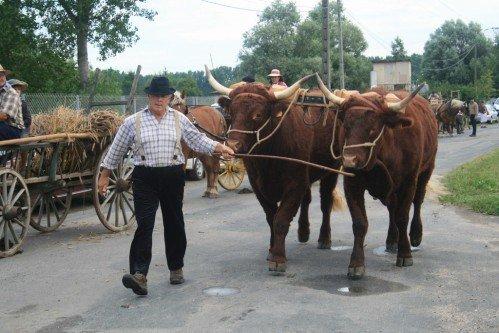 Fête du patrimoine de Manziat le 5 Août 2012 2