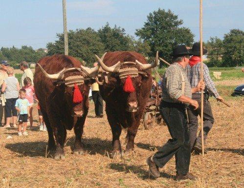 Fête du patrimoine de Manziat le 5 Août 2012 3