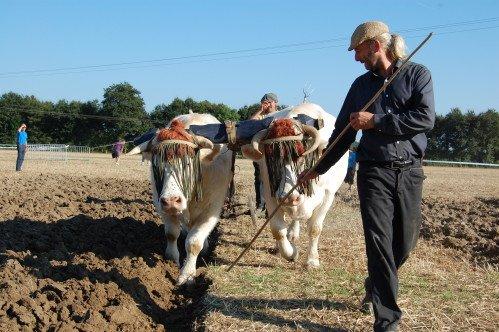 Premiers labours pour Froment et Azalée à Vitry en Charollais les 8 et 9 septembre 2012 1