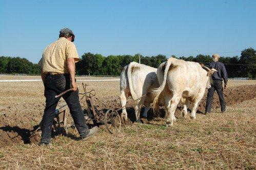 Premiers labours pour Froment et Azalée à Vitry en Charollais les 8 et 9 septembre 2012 3