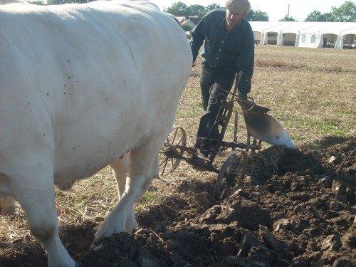 Premiers labours pour Froment et Azalée à Vitry en Charollais les 8 et 9 septembre 2012 5