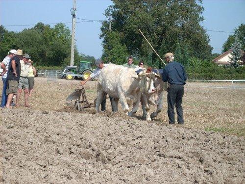 Premiers labours pour Froment et Azalée à Vitry en Charollais les 8 et 9 septembre 2012 6