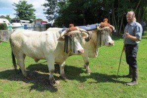 Taille d'un joug vache boeuf 10