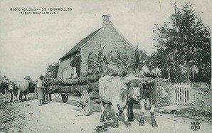 transport de grume à Charolles